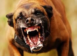 O cão